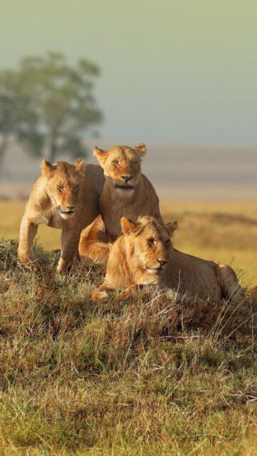 Lifetrek treking potovanja: Kenija safari