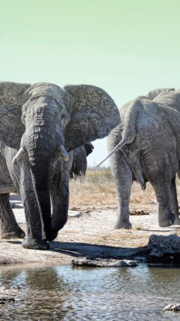Namibija: Safari Etosha