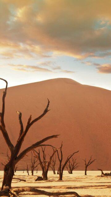 Puščava Namib